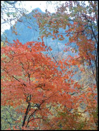 fall_colors_2001.jpg